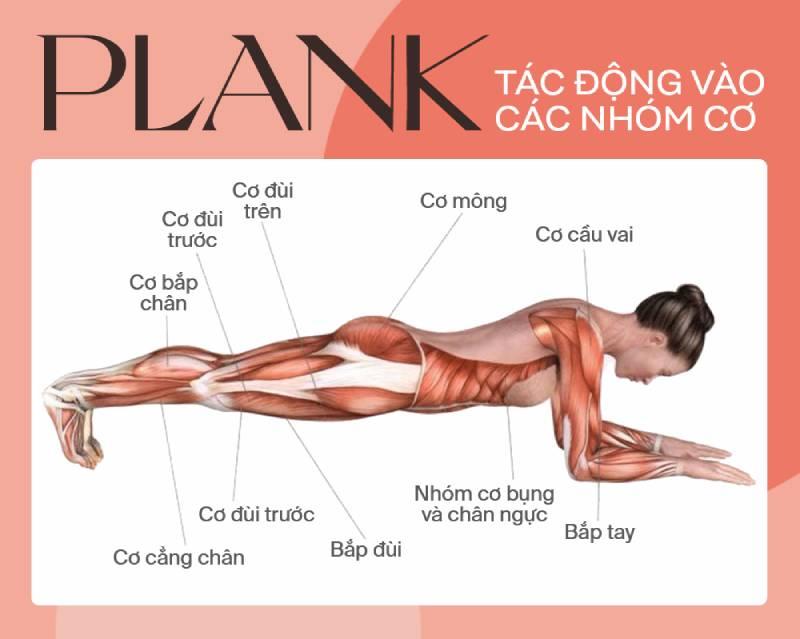 Bài tập Plank tác động vào các nhóm cơ trên cơ thể giúp săn chắc và dẻo dai