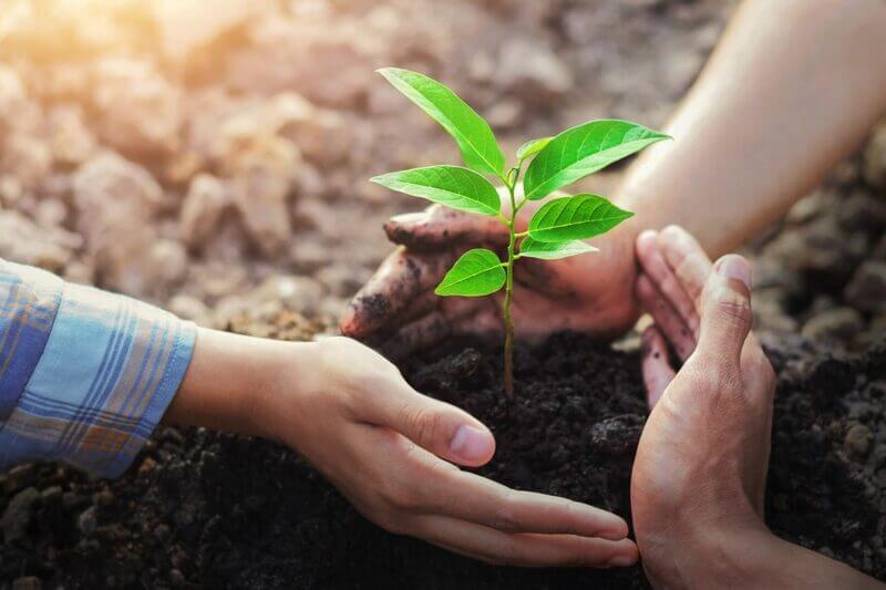 Làm những việc theo sở thích như trồng cây, nuôi thú cưng....nhằm đem đến những niềm vui trong cuộc sống